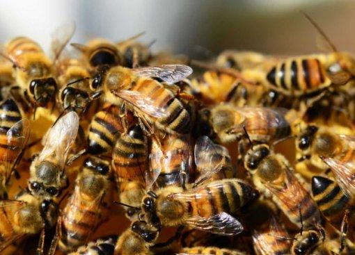 На PornHub появился раздел с порно с пчелами, озвученным известными актерами. Нет, это не шутка