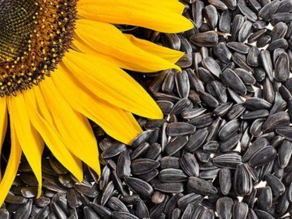 Семена подсолнечника: оптовые закупки