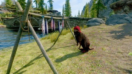 Теперь в Skyrim можно сыграть за грозу всех драконов — домашнего кота