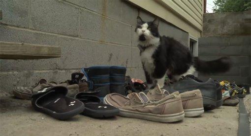 Кот стащил 25 пар соседской обуви истал знаменитостью