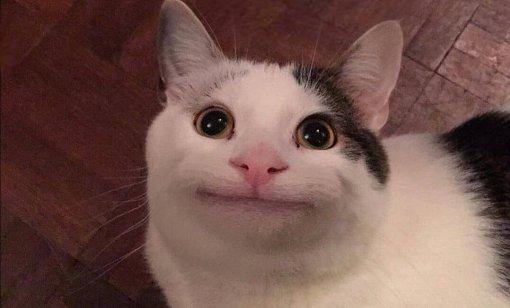 Как Вежливый кот стал мемом, ичто постят вего Инстаграме