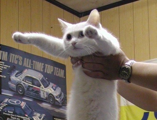 Всети прощаются сДлиннокотом— кошка умерла ввозрасте 18 лет