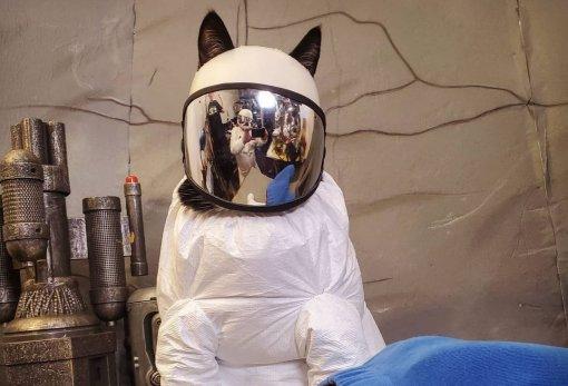 Кошка косплеит персонажа изAmong Us
