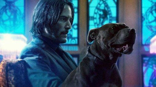«Выслучайно убили собаку Джона Уика. Что выскажете, чтобы онпощадил вас?» Это новый тред