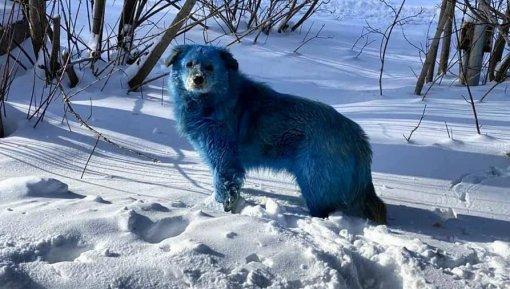 Стаю синих собак обнаружили вгороде Дзержинске