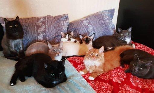 Автор мема с котами «Наташ, мы все уронили» подала заявку на регистрацию товарного знака