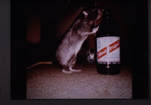 «Отряд самоубийц»: Марго Робби раскрыла, что стало скрысой, подаренной Джаредом Лето