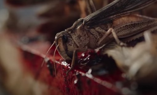 Netflix показал трейлер фильма ужасов «Рой» про саранчу